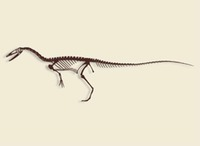 New Mexico - Fossil - Coelophysis
