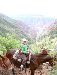 Site - Grand Canyon Mule Ride