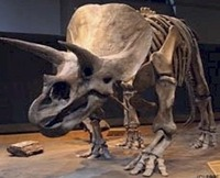 South Dakota - Fossil - Triceratops